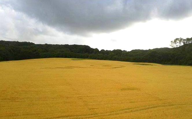 Crop Circle at LimeKiln Wood at Shropshire UK, 28 July 2013