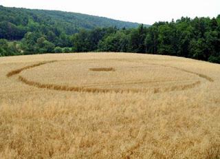 Crop Circle at Pecarovci,  Slovenia, 16 July 2013