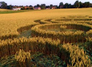 Crop Circle at Rue Lenoir, Momalle, Belgium, 21 July 2013