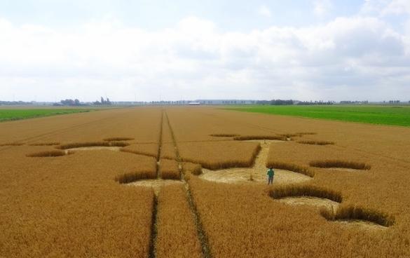 Crop Circle at Standdaarbuite,  Holland. 30 July 2013