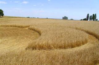 Crop Circle at Wasilewko, Poland, 23 July 2013.